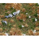 Segment de paysage sol forestier / countryside segment, Forest floor