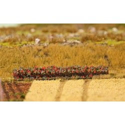 4 Haies feuillage automne / Hedges, Autumn foliage