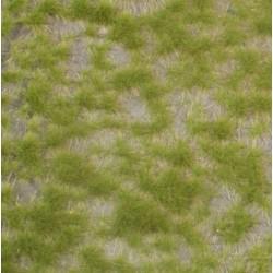 Touffes d'herbes à deux couleurs / Two colored tufts