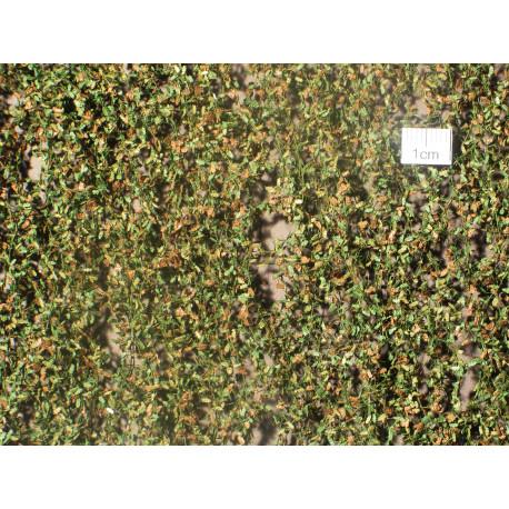 Feuilles chêne début automne / Oak leaf early autumn