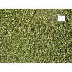 Feuilles de Bouleau été / Birch leaves summer H0