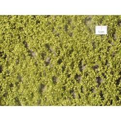 Feuilles de bouleau printemps / Birch leaves spring H0