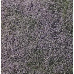 Flowering Foliage Purple 464cm²
