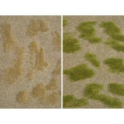 Steppe herbeuse / Grass Steppe