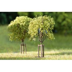 10 Jeunes arbres / 10 trees