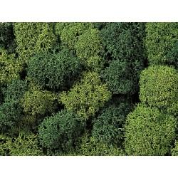 Mousse Assortiment verts / Lichen, Green Mix, assorted, 75 gr