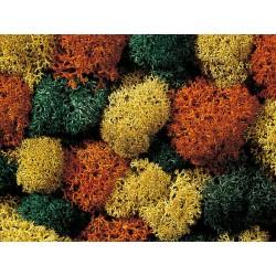 Mousse Assortiment Automne / Lichen, Autumn Mix, 35 gr